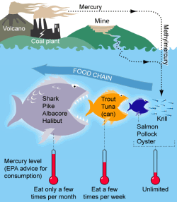 Schemata of the pollution pathway for mercury in fish. Consumption advice is for non-pregnant adults